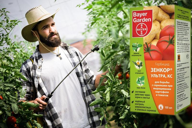 Зенкор для картофеля от сорняков: инструкция по применению