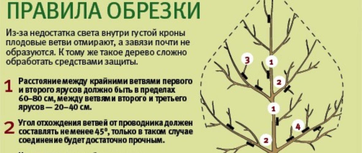 Как формировать калину как дерево? - сад и огород
