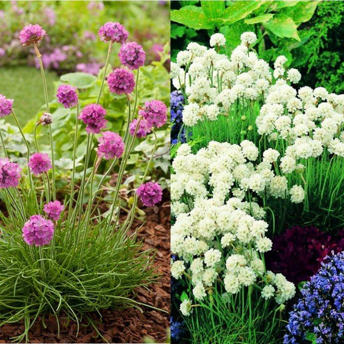Все виды садовых цветов многолетников для урала