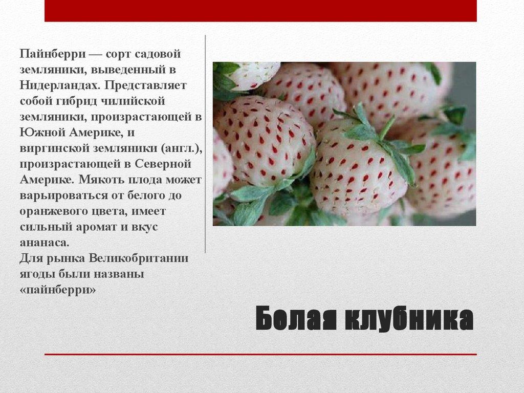 Лучшие сорта земляники описание и фото на supersadovnik.ru