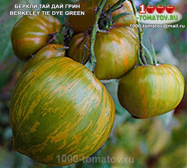 Томат беркли тай дай хаат: описание сорта пинк, отзывы об урожайности помидоров и фото плодов