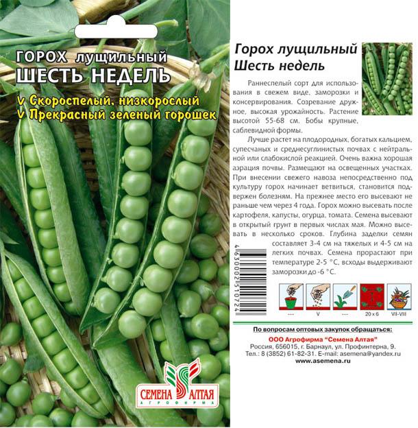Фиолетовый горох: лучшие сорта, описание и характеристика, выращивание с фото