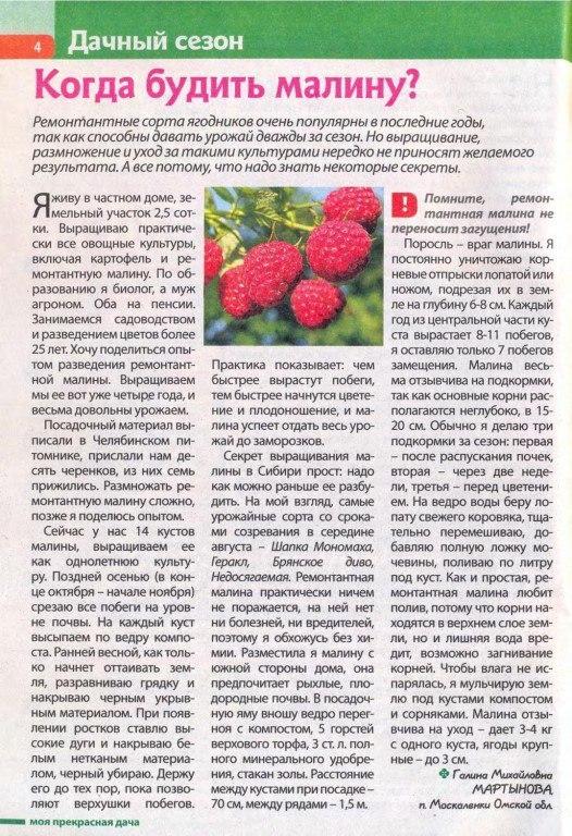 Почему ягоды малины не хотят расти, что делать если цветет и не плодоносит