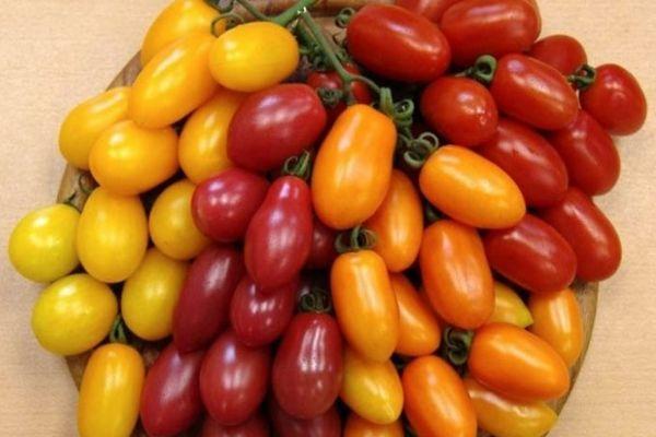 Томат красный финик — описание сорта, урожайность, фото и отзывы садоводов