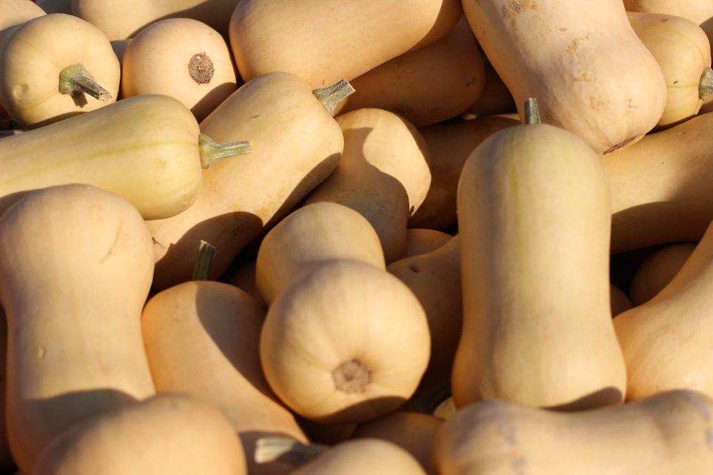 Тыква баттернат — лучшие сорта и способы использования в кулинарии. фото — ботаничка.ru