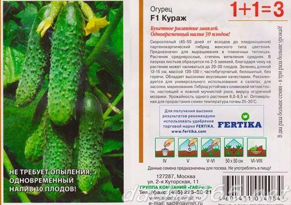 Огурцы кураж (f1): описание сорта, посадка и уход за ним, отзывы дачников, фото кустов и плодов
