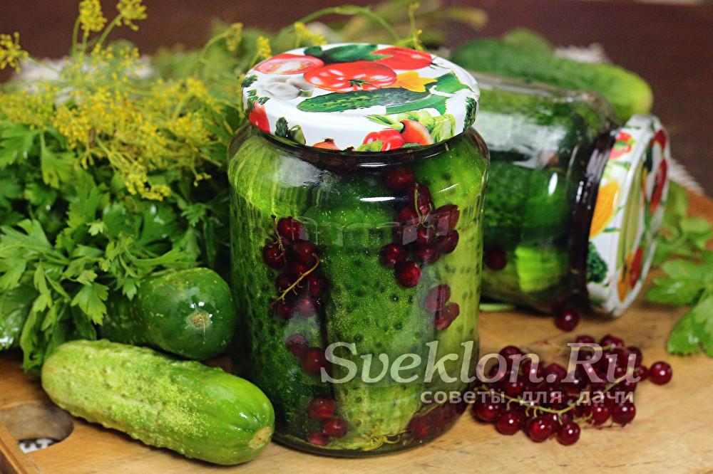 Огурцы с красной смородиной на зиму рецепт с фото пошагово - 1000.menu