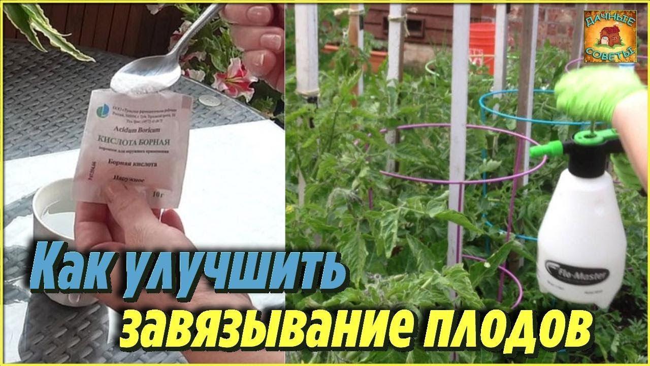 Борная кислота: применение в садоводстве на supersadovnik.ru