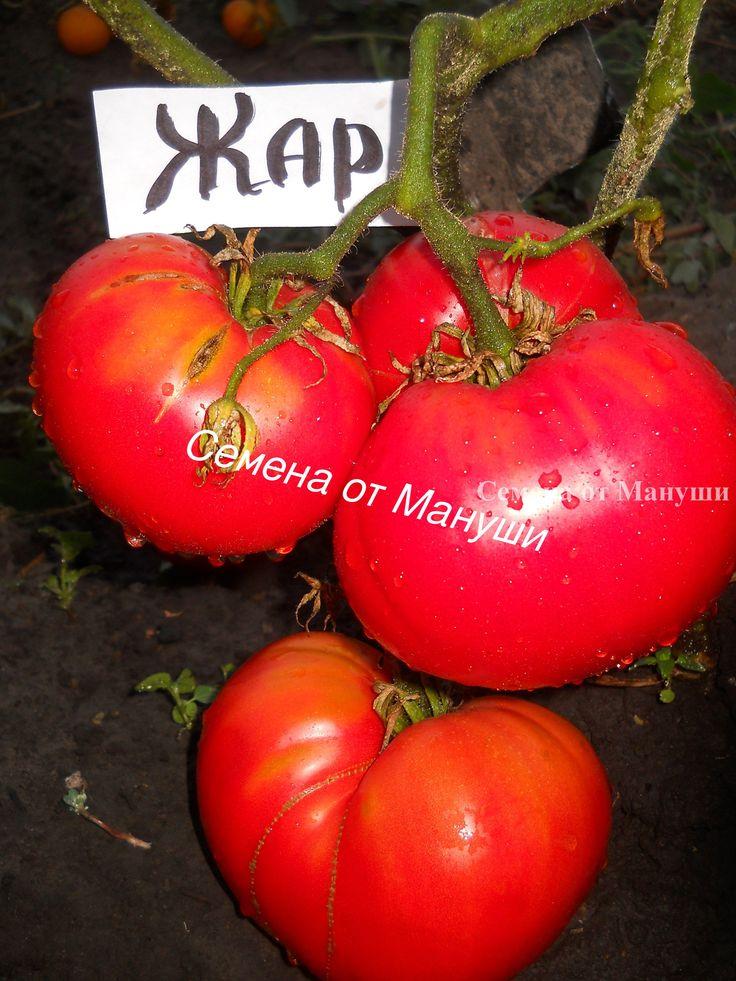 Томат кострома f1: описание и характеристика сорта с фото, урожайность, особенности выращивания, фото, видео