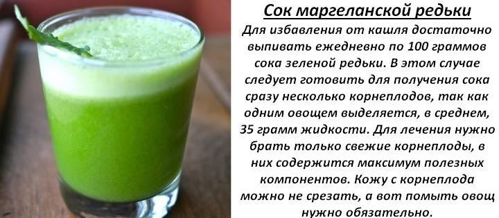 Редька зеленая: полезные свойства и противопоказания для организма человека