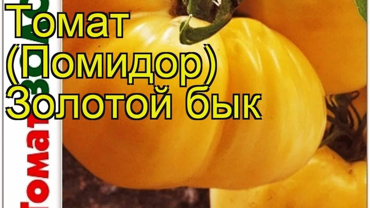 Томат золотой юбилей f1: агротехника, описание сорта, фото русский фермер