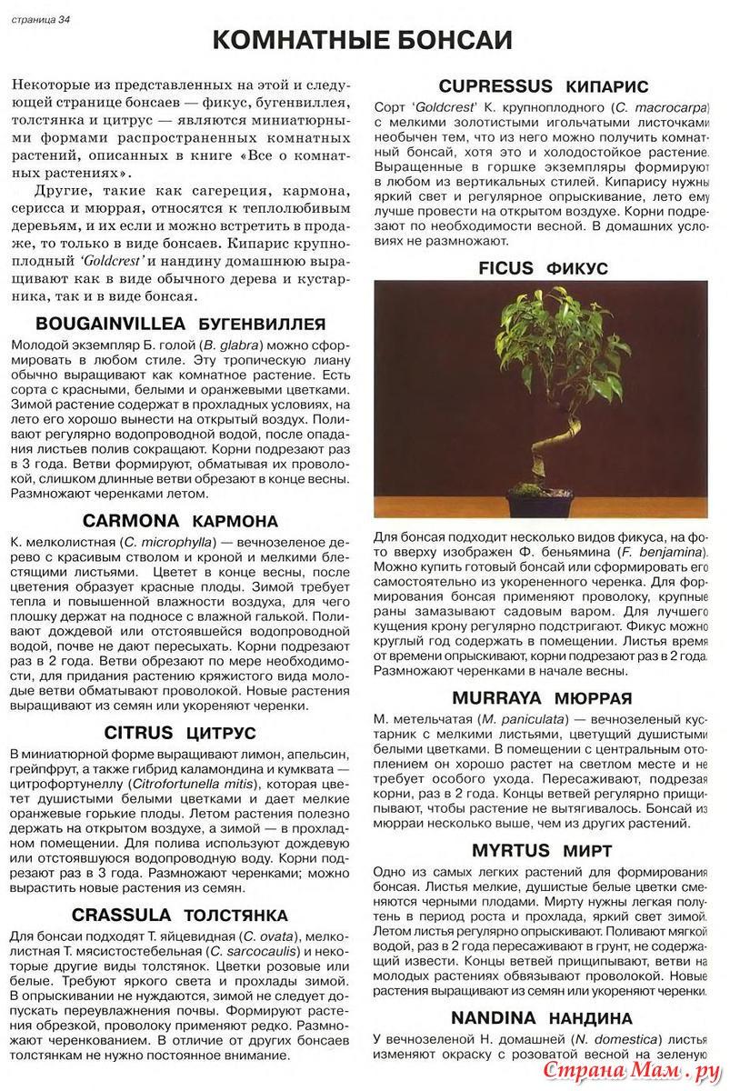 6 лучших растений для бонсай. из чего вырастить бонсай? список названий с фото — ботаничка.ru