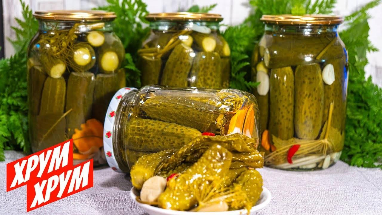 Огурцы без уксуса на зиму: засолка без стерилизации, рецепты хрустящих соленых и маринованных огурцов