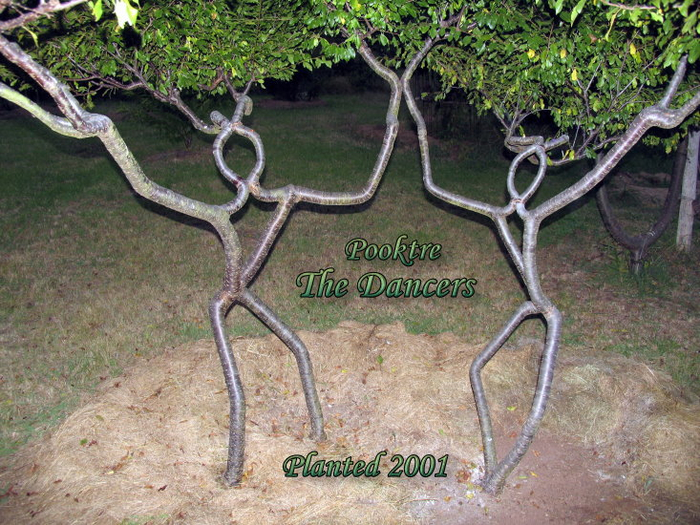 Арбоскульптуры или как живые деревья превратить в предметы искусства