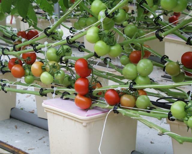 Гидропоника своими руками для огурцов и томатов: как сделать установку своими руками, приготовление питательного раствора