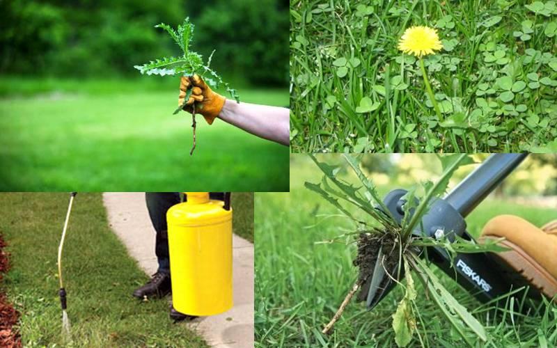 Как избавиться от крапивы навсегда: лучшие меры борьбы с травой на участке