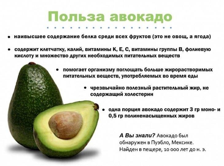 Масло авокадо: способы применения, польза и вред, как принимать и хранить, отзывы