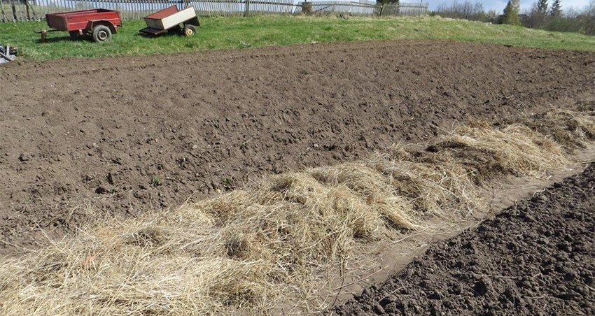 Картофель под мульчей: что это такое, как происходит посадка, а также распространенные способы выполнения процедуры (соломой, опилками, торфом, пленкой, перегноем) русский фермер
