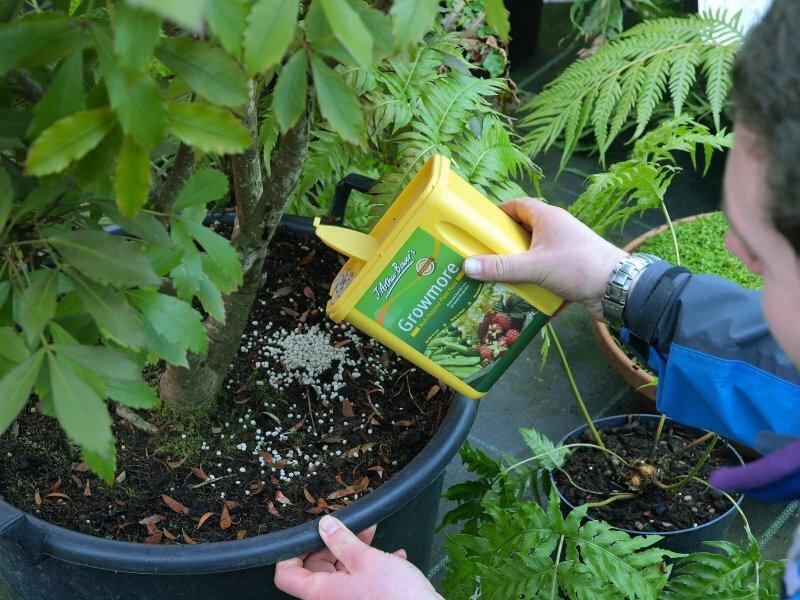 Выращивание брусники и уход за ней