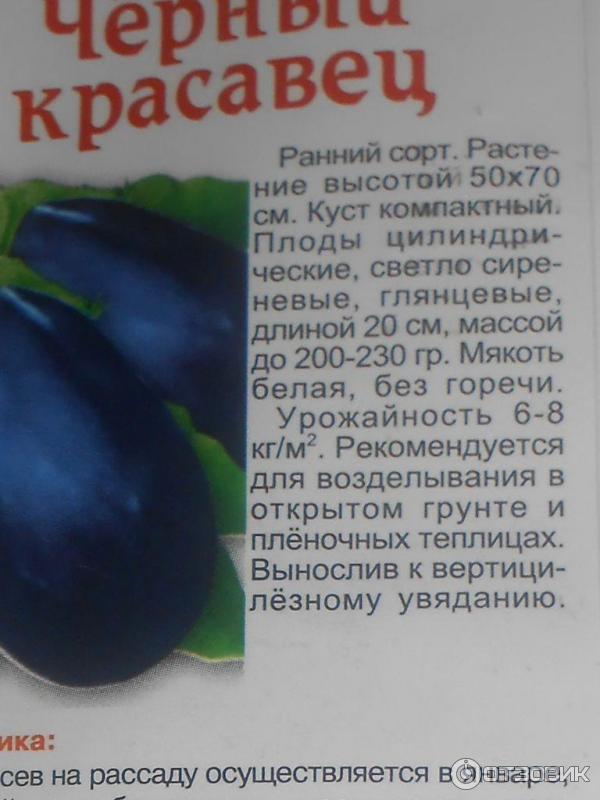 Баклажаны сорта «черный красавец»: описание и рекомендации по выращиванию