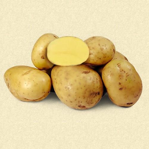 ✅ каратоп: описание семенного сорта картофеля, характеристики, агротехника - tehnomir32.ru