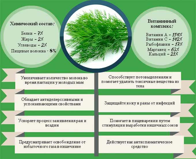 Семена укропа: польза, состав и противопоказания | food and health