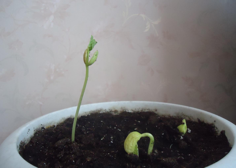 Чем полезны ростки фасоли, как их правильно прорастить и вкусно приготовить