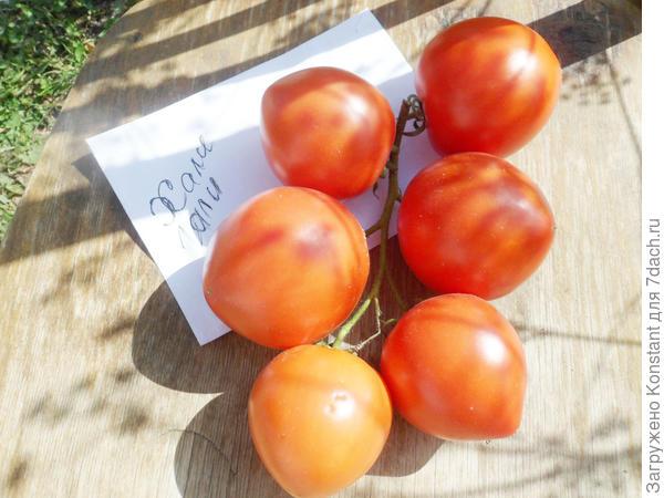 Получаем рекордный урожай с томатом «хали гали»: лайфхаки огородников и основные правила ухода за гибридом