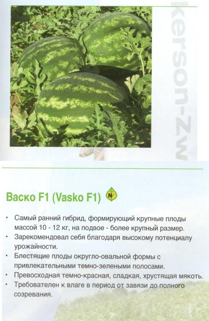 Описание и характеристики арбуза сорта каристан f1, посадка и уход