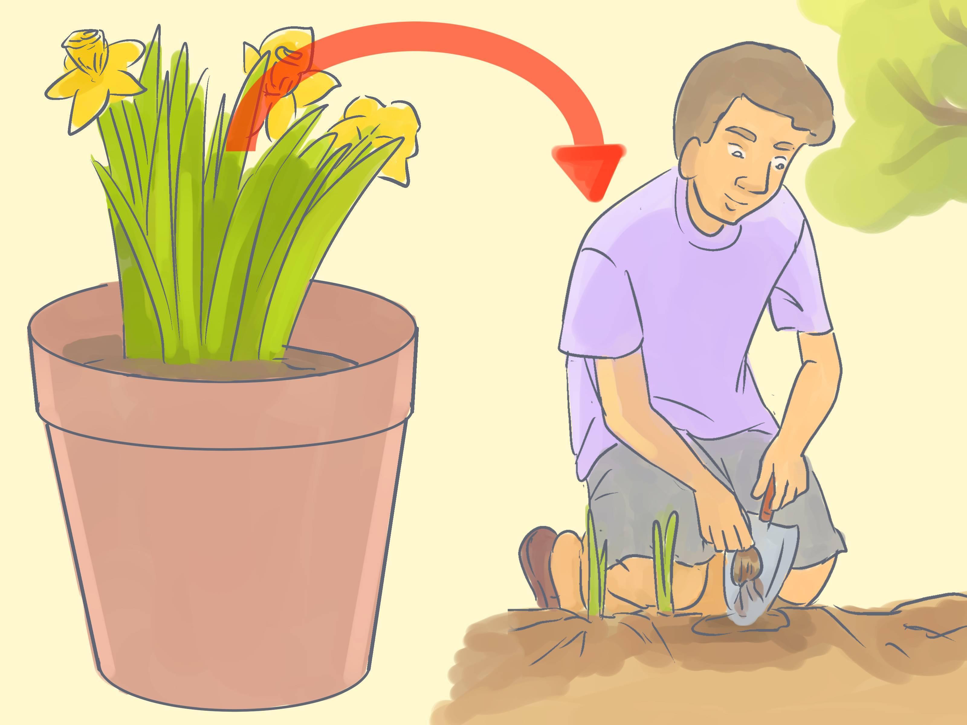 Когда пересаживать ирисы? как ухаживать за ирисами после цветения?