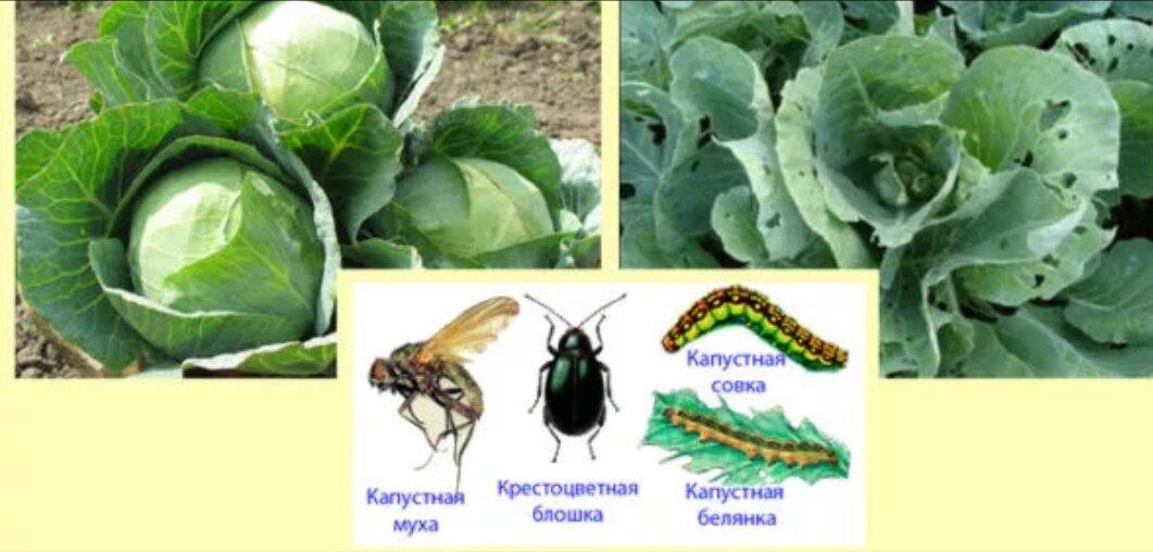 Народные средства борьбы с вредителями сада и огорода. рецепты без химии