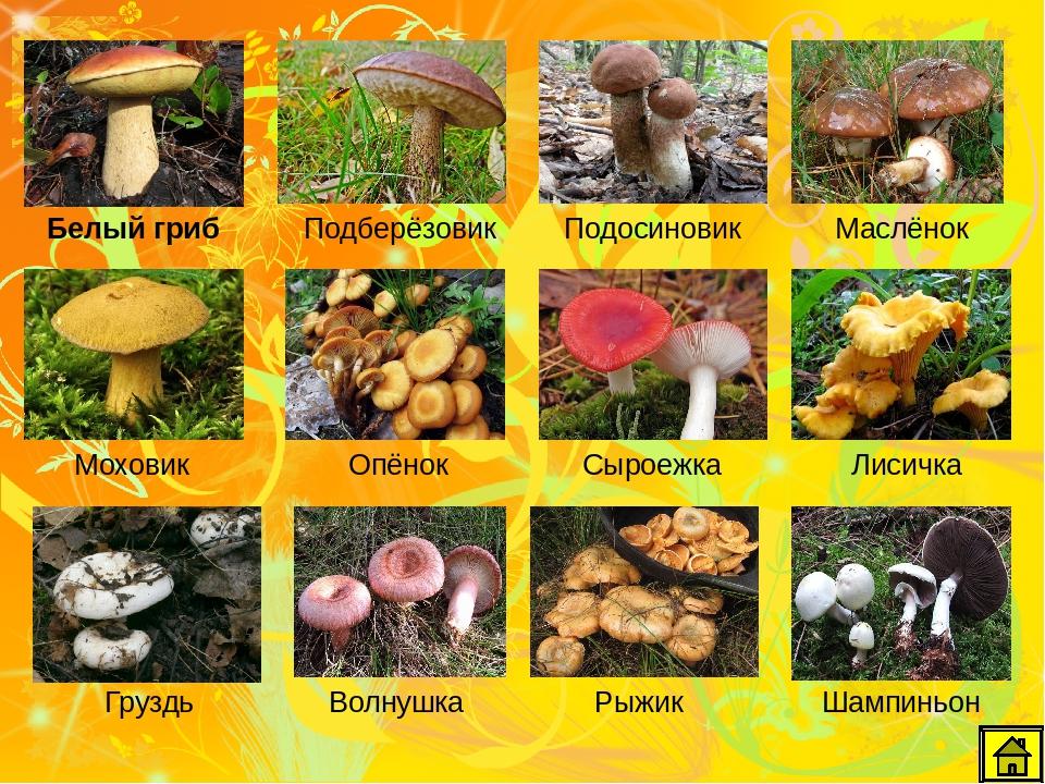 Октябрьские грибы: съедобные и несъедобные виды - огород, сад, балкон - медиаплатформа миртесен