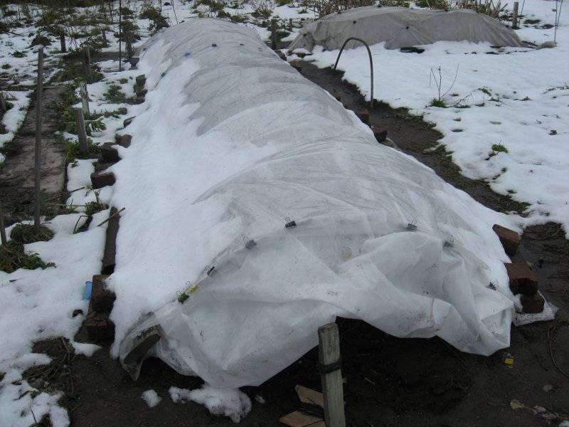 Подготовка пионов к зиме: когда и как обрезают, правила укрытия и обработки