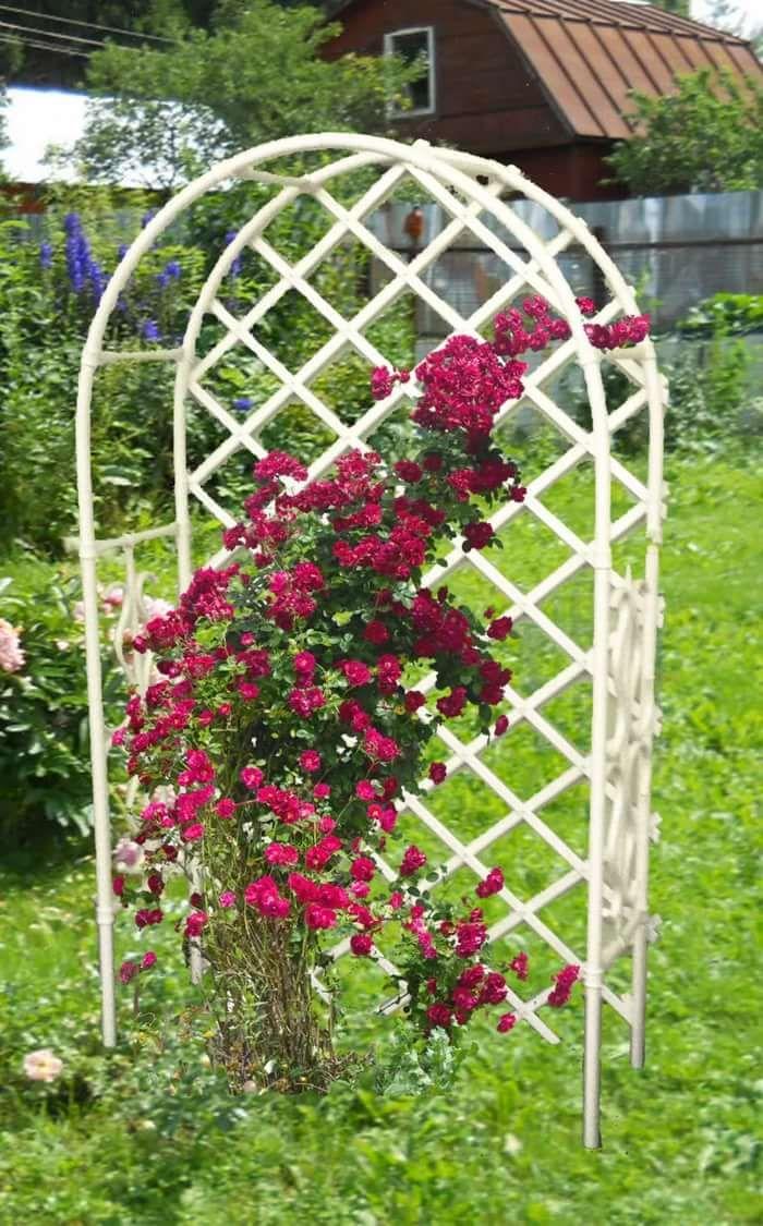 Особенности шпалер для роз и их применение