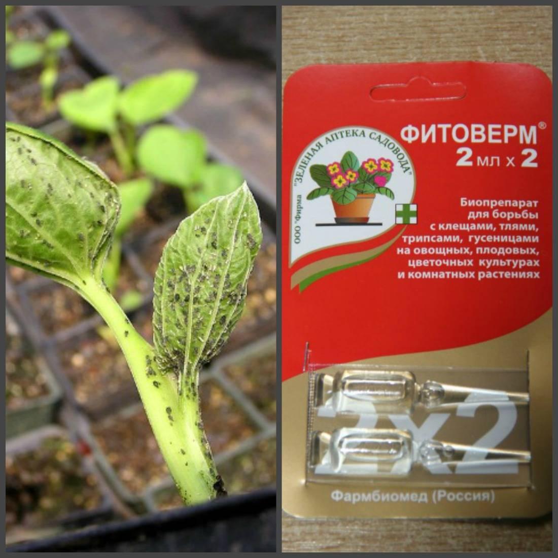 Фитоверм для комнатных растений - инструкция по применению, плюсы и минусы