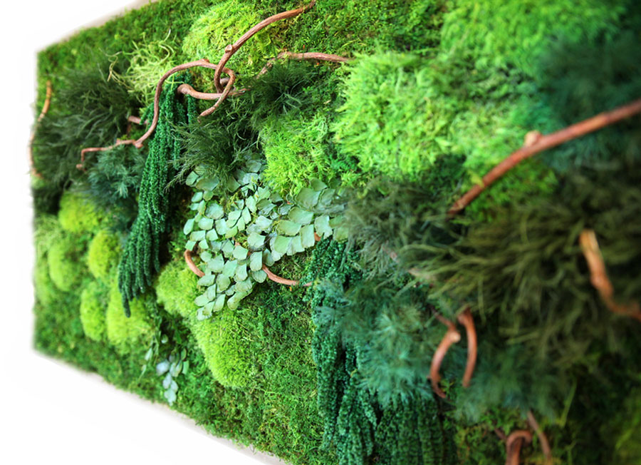 Мхи и лишайники: декоративное использование в саду