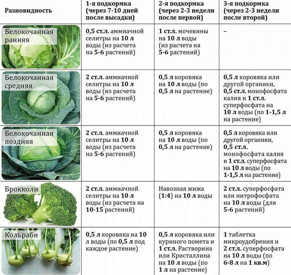 Чем лучше подкормить капусту для роста народными средствами, когда и как внести удобрения