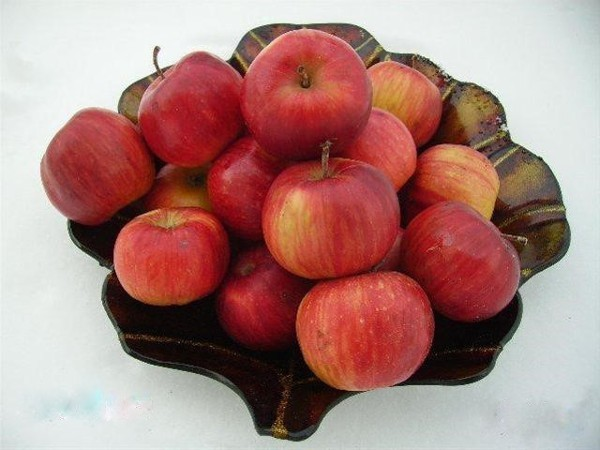 Яблоня беркутовское — описание сорта, фото, отзывы