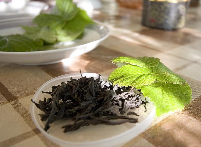 Чай из листьев смородины: польза и вред, когда собирать сырье, чем полезен напиток из смородиновых почек и веток малины