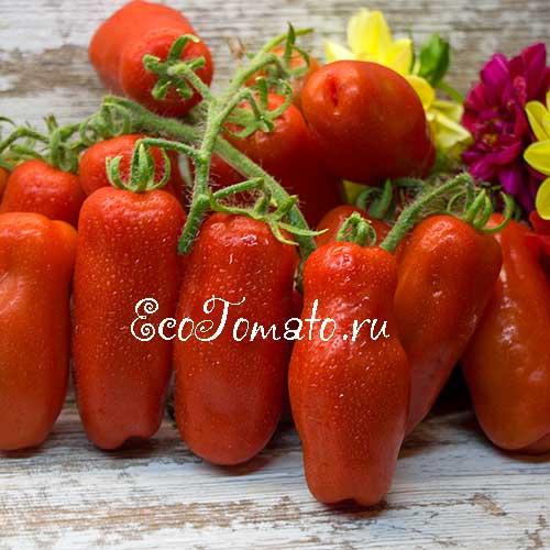 Индетерминантные и детерминантные сорта томатов: что это такое и как их выращивать?