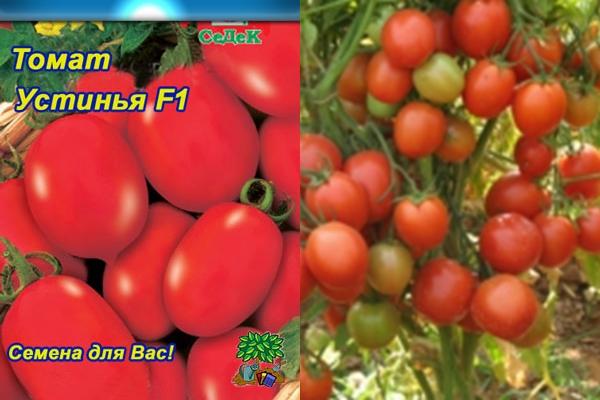 Характеристика и описание томата Устинья F1, агротехника культивирования гибрида