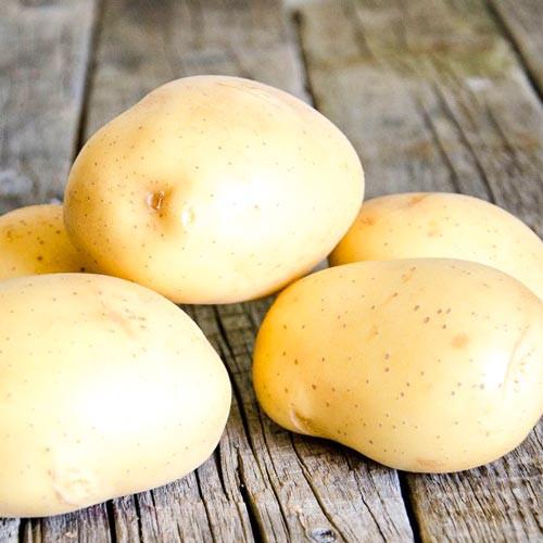 Характеристика и описание сорта картофеля импала