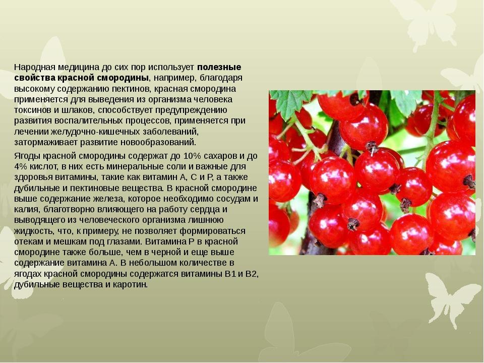 Смородина красная – польза и вред для здоровья женщин, мужчин, детей