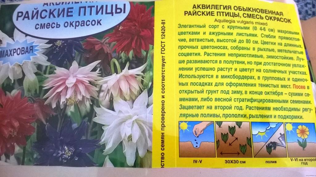 Выращивание аквилегии из семян: правила и схема