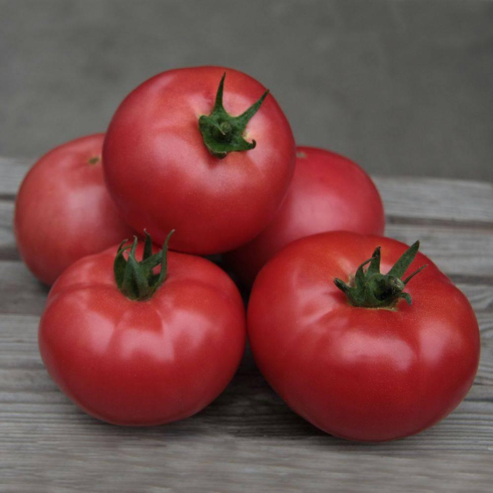Томат кибиц − описание сорта, фото помидоров, отзывы овощеводов, урожайность, выращивание, видео