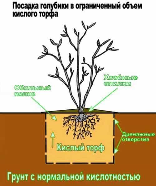 Почва для голубики – какой состав нужен и как сделать своими руками