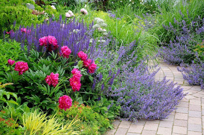 Идеи использования лаванды в ландшафтном дизайне — в сочетании с растениями и одиночной посадкой