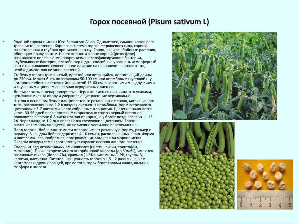 Какие бывают бобовые растения? виды и описание