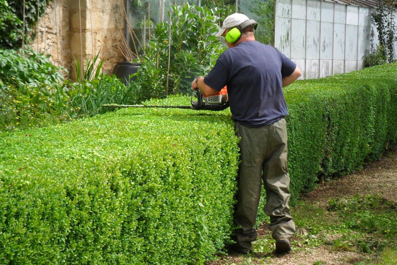 Сроки стрижки живой изгороди. особенности стрижки разных растений