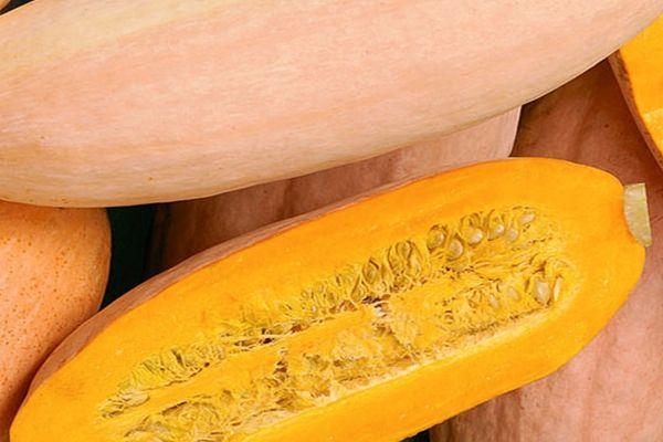 Тыква розовый банан: отзывы, описание сорта, фото, полезные свойства